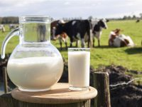 Dairy-production